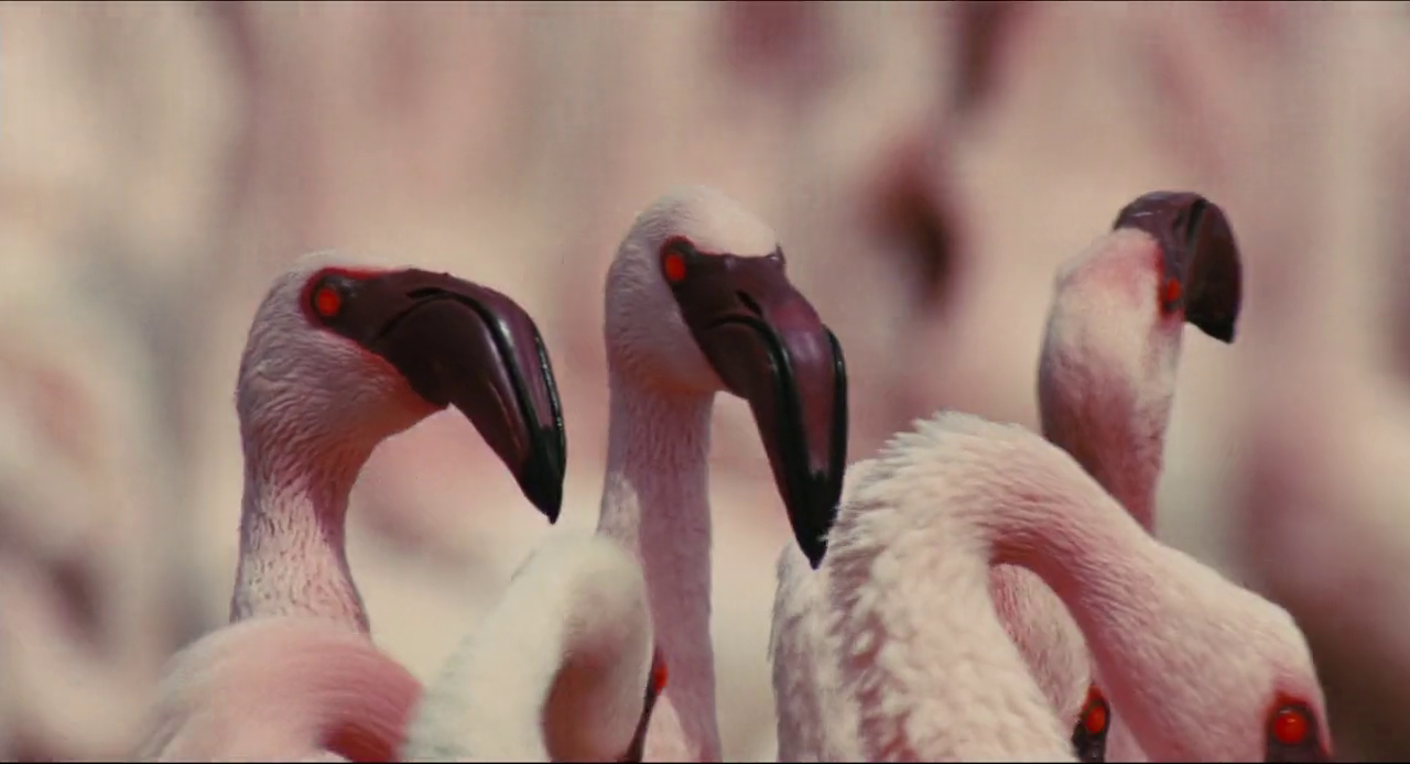Download The Crimson Wing Mystery of the Flamingos 2008 Full Movie in Hindi