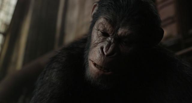 [2014][美国][猩球崛起2:黎明之战 Dawn of the Planet of the Apes][DVD/MKV/BT电影下载]