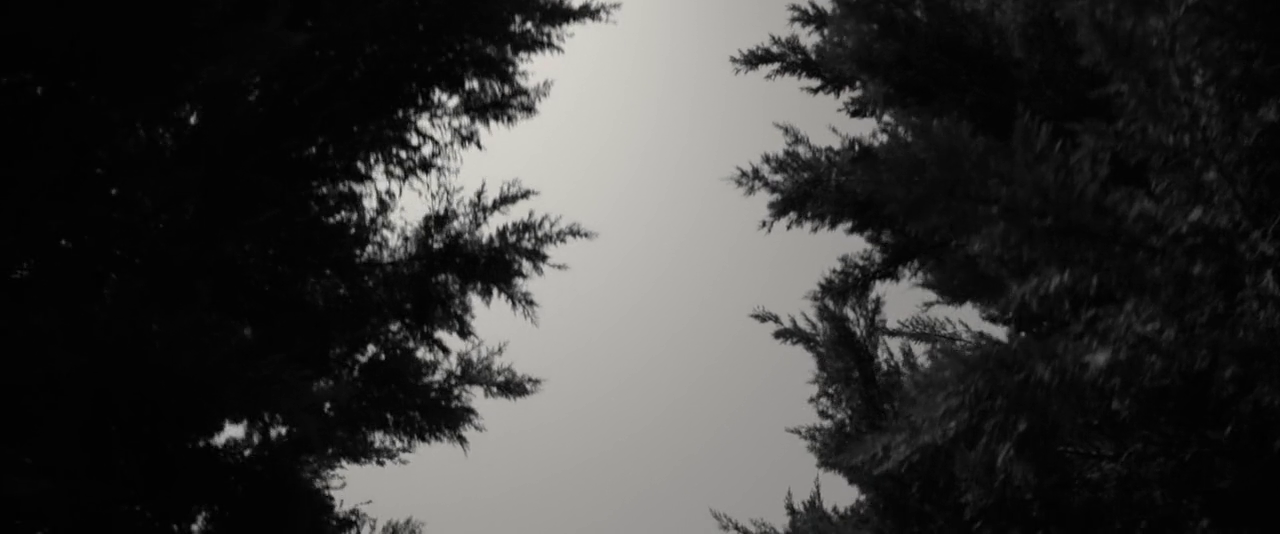 73205916797578666377.png (1280×534)