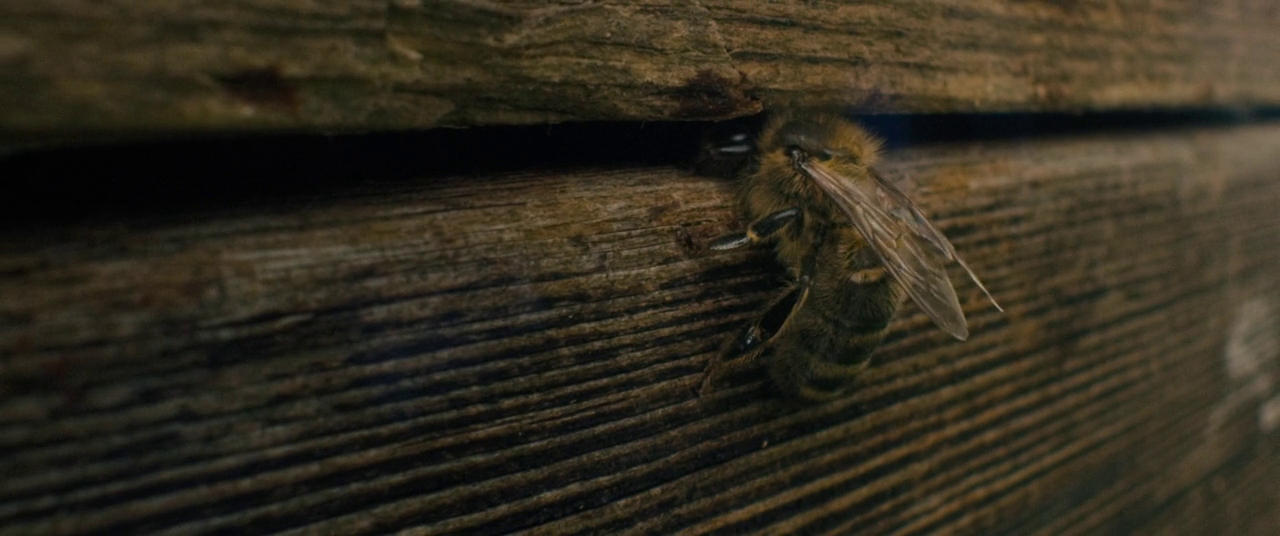 Tell It to the Bees Full Movie Download